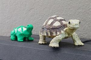 Turtle following turtle